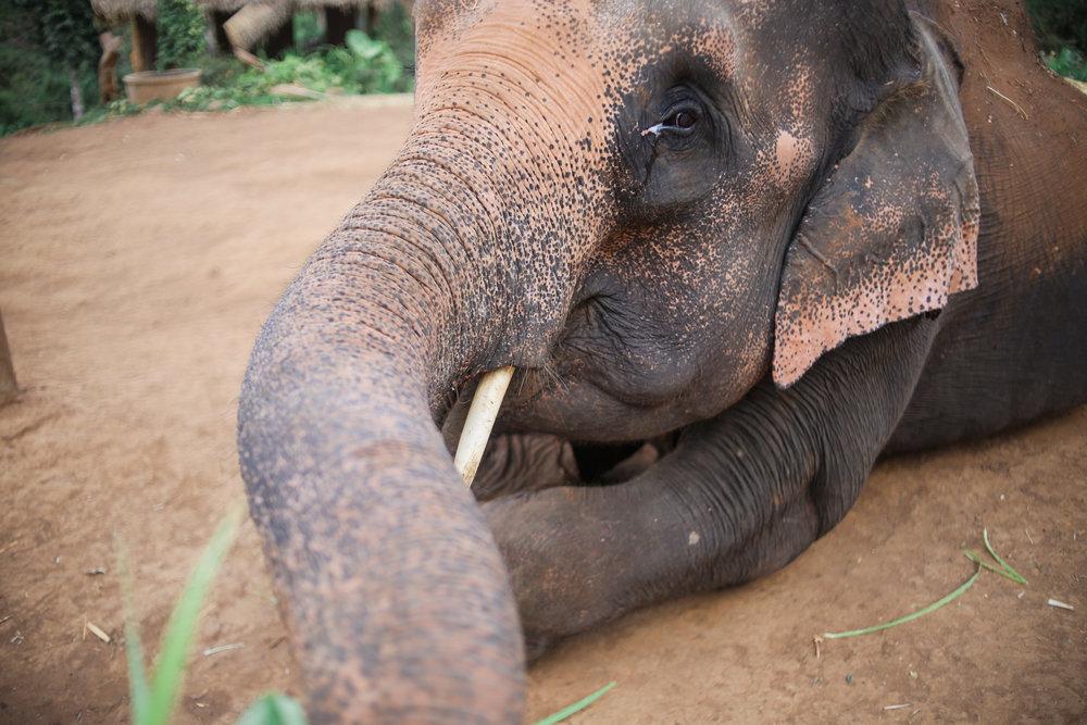 elephant_blog-21.jpg