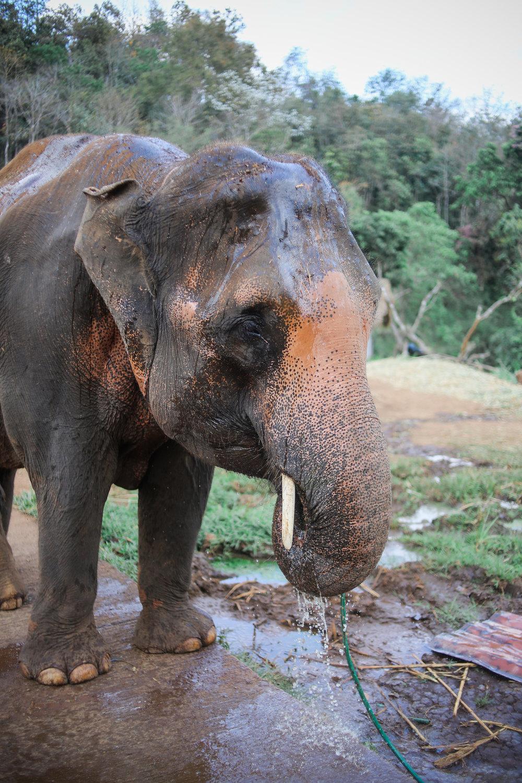 elephant_blog-23.jpg