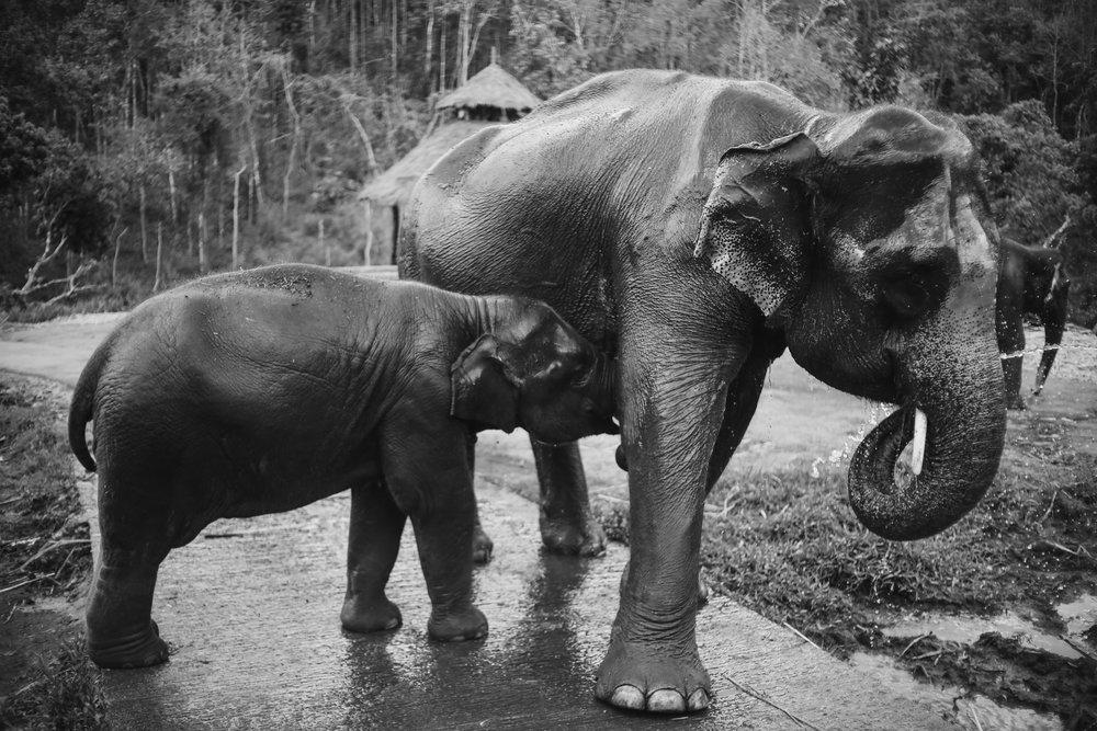 elephant_blog-30.jpg