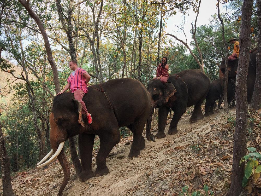 elephant_blog-34.jpg