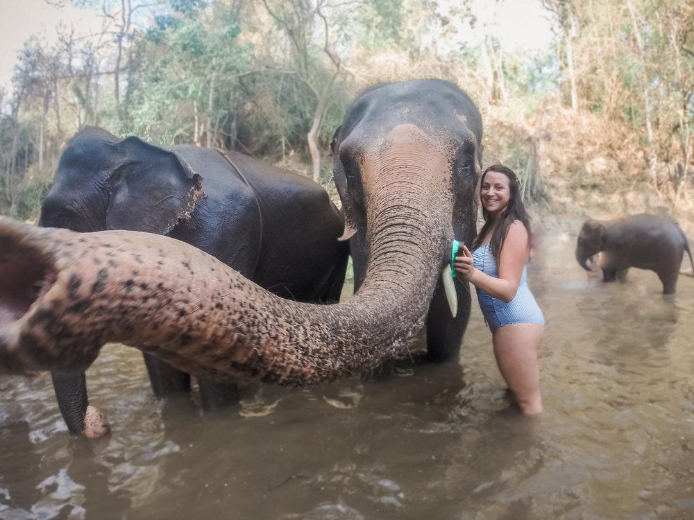 elephant_blog-38.jpg