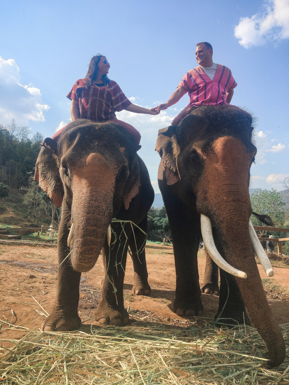 elephant_blog-40.jpg