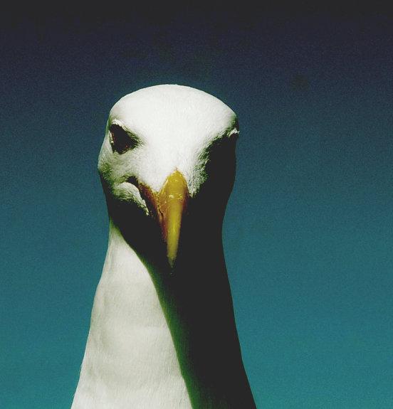 Hello_Meteor_Bio_Seagull