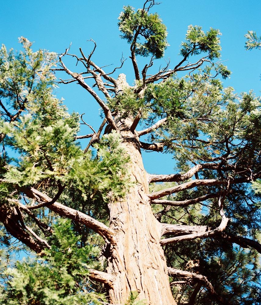 214 film tree.jpg