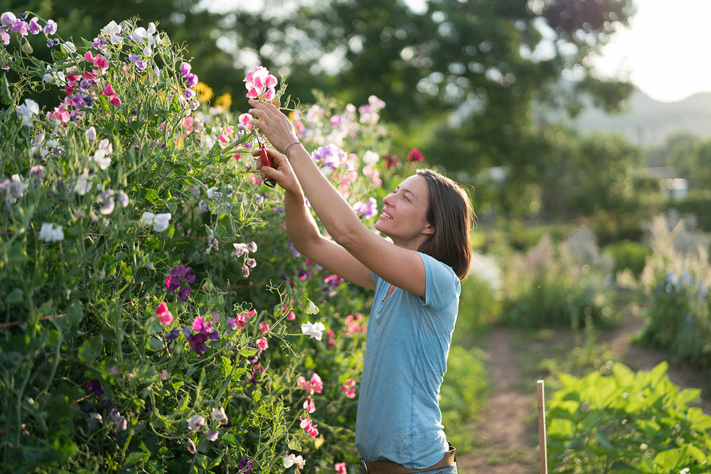 nelson-esseveld-farmette-flowers-17.jpg