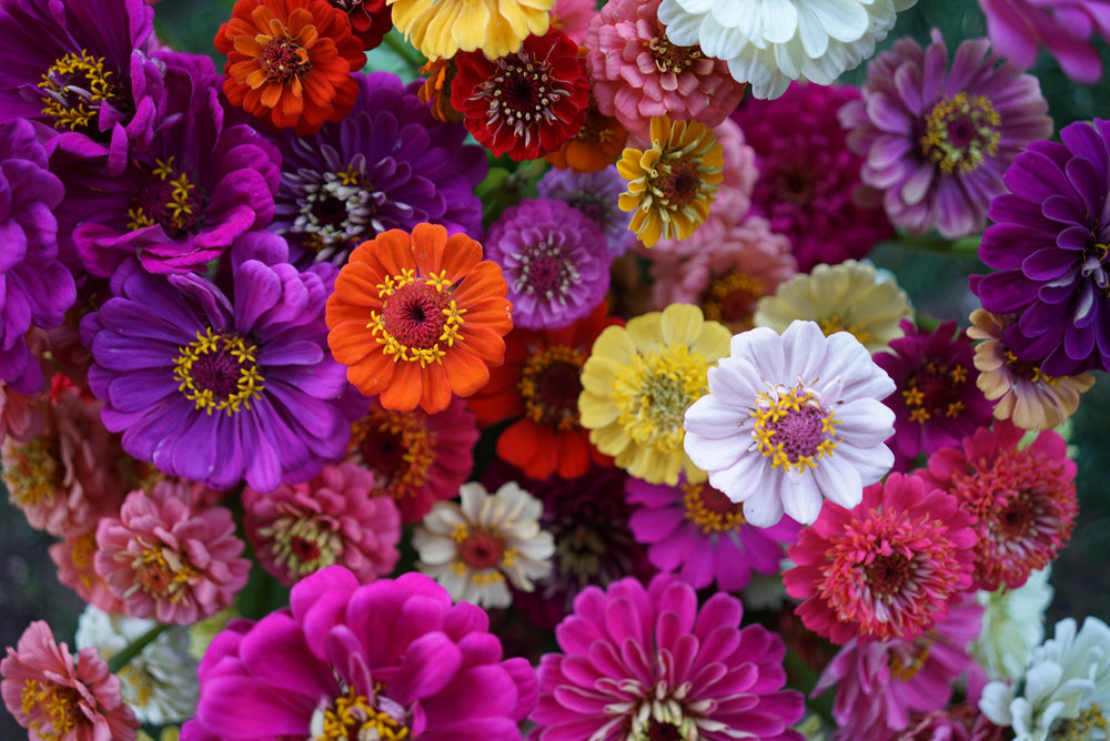 nelson-esseveld-farmette-flowers-29.jpg