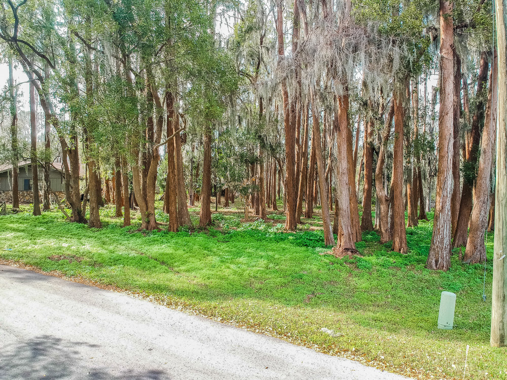 3905 Peninsular Dr Land O Lakes Florida - Street View