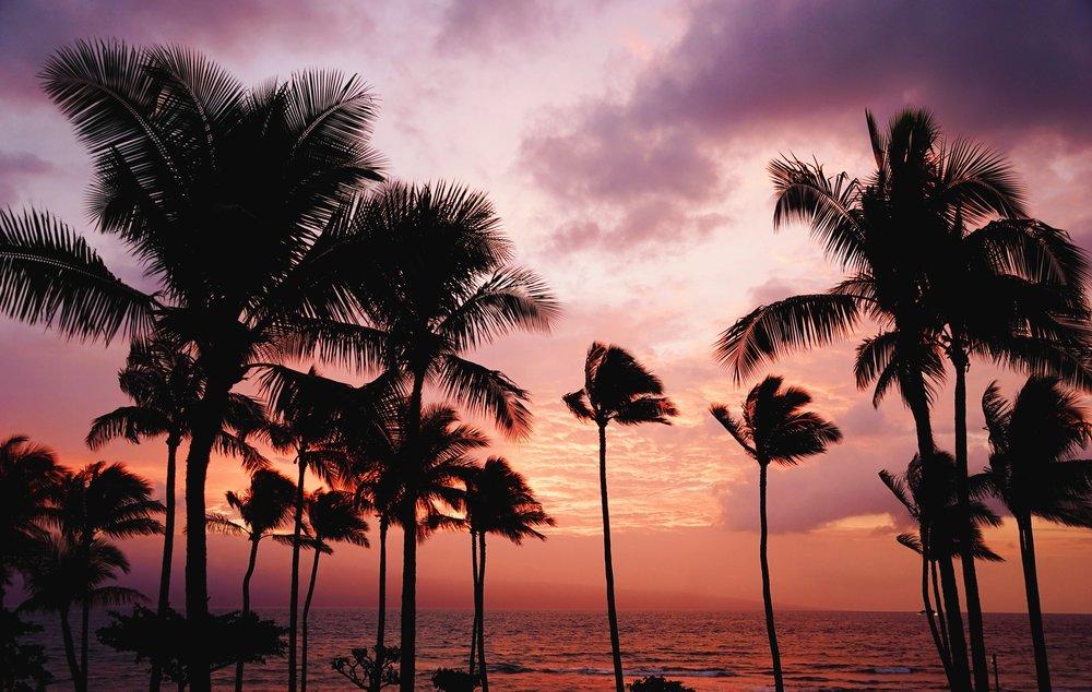 Sunset palm.jpg