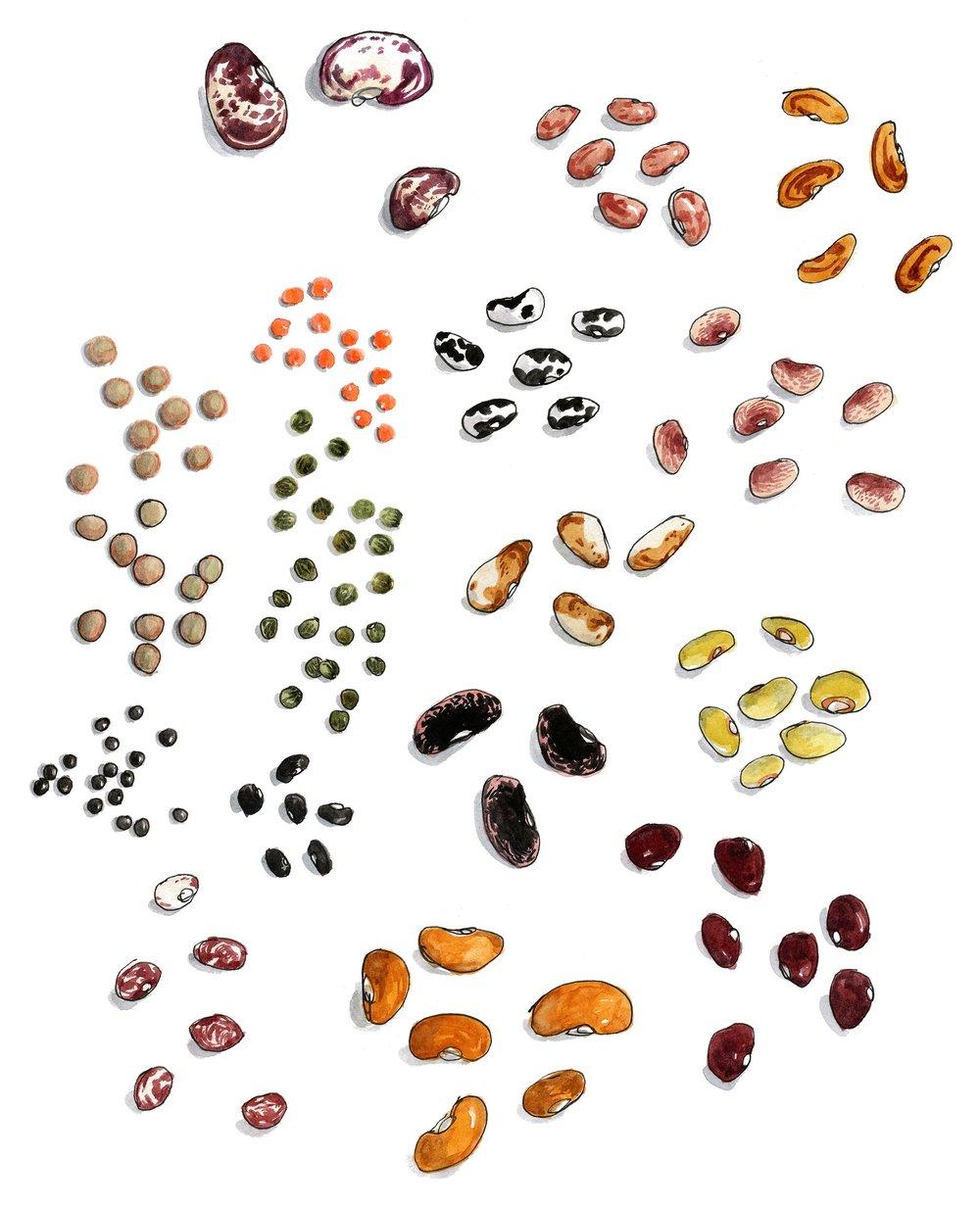 Beans-2500.jpg
