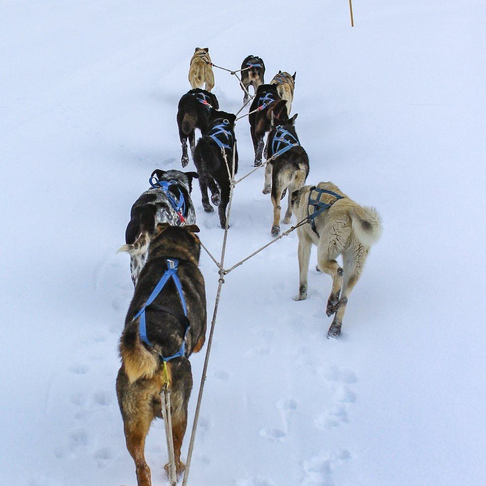 alaska-mushing-school-home-1 - Copy (2).jpg