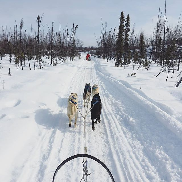 #Repost @spawnak ・・・ Assistant Art Director @palomadd88 took a break from racing against deadlines this weekend, to race with her four furry new friends. Next stop Nome. . . . . . #visitalaska #travelalaska #sharingalaska #thealaskalife #explorealaska #naturealaska #ilovealaska #iloveanchorage #alyeska #thelastfrontier #alaska #wasilla #iditarod #mushingschool #mushing #dogsledding #sleddog #visitanchorage #thisisalaska #anchorage