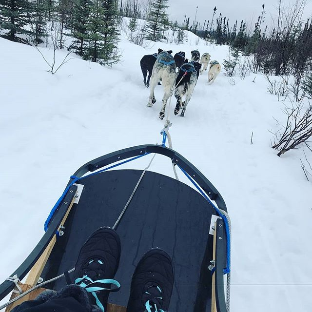 #Repost @kelli_aliciac ・・・ Yesterday was pretty spot on... . . . . . #visitalaska #travelalaska #sharingalaska #thealaskalife #explorealaska #naturealaska #ilovealaska #iloveanchorage #alyeska #thelastfrontier #alaska #wasilla #iditarod #mushingschool #mushing #dogsledding #sleddog #visitanchorage #thisisalaska #anchorage