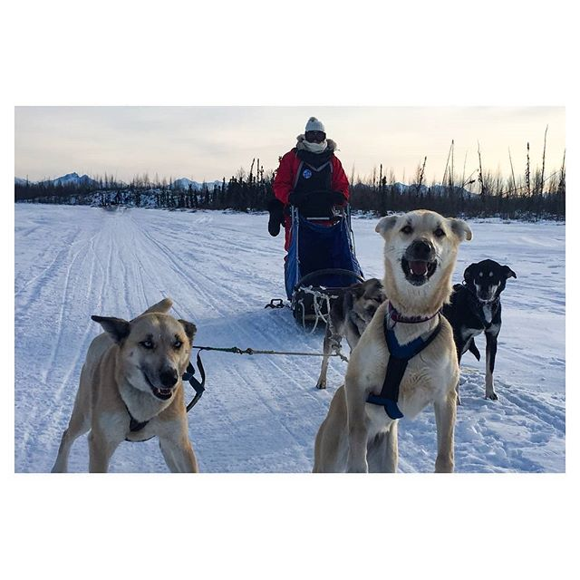 #Repost @aliciapaigey ・・・ #tbt ❄️🐶 . . . . . #visitalaska #travelalaska #sharingalaska #thealaskalife #explorealaska #naturealaska #ilovealaska #iloveanchorage #alyeska #thelastfrontier #alaska#wasilla #iditarod #mushingschool #mushing #dogsledding #sleddog #visitanchorage #thisisalaska #anchorage