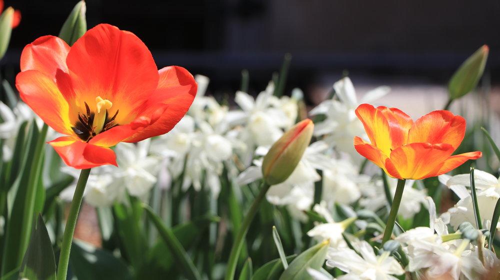 IMG_2610 - Orange And White.JPG