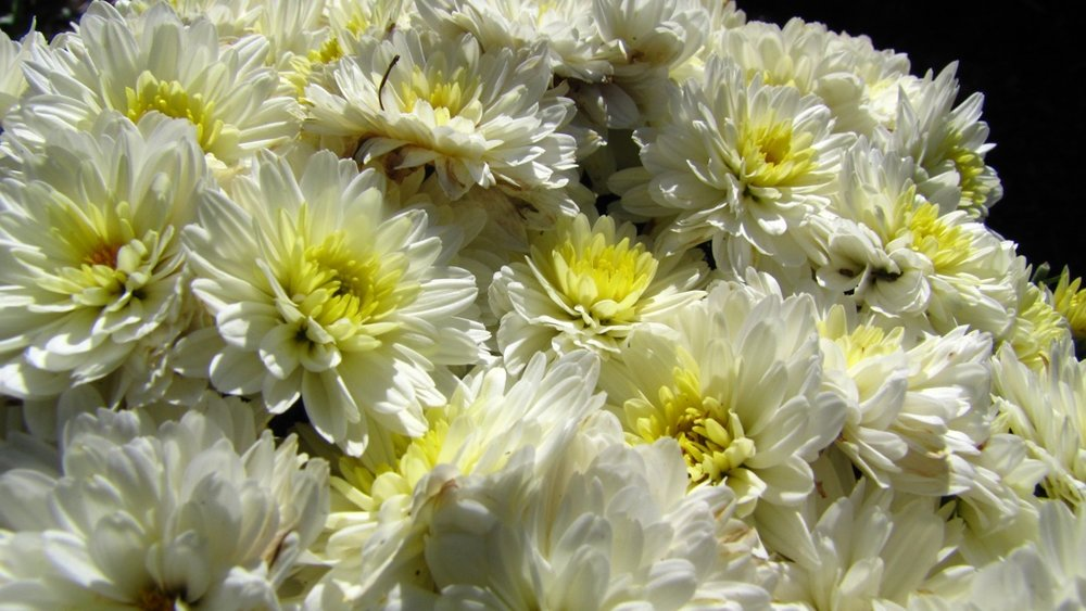 White & Yellow Flowers