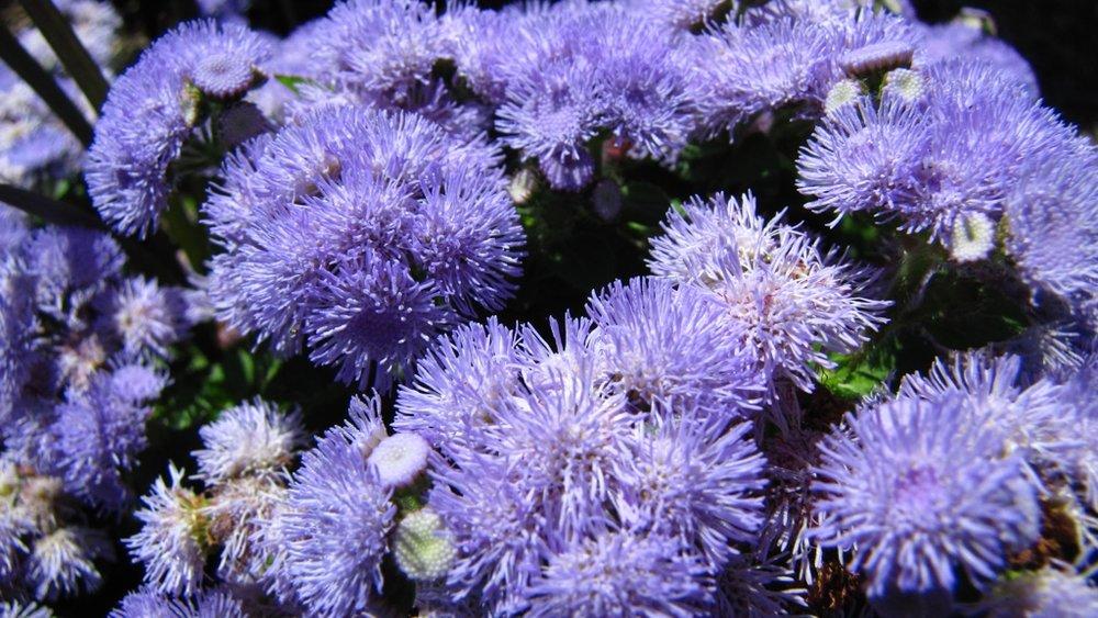 IMG_2181 Purple Flowers_1024.jpg
