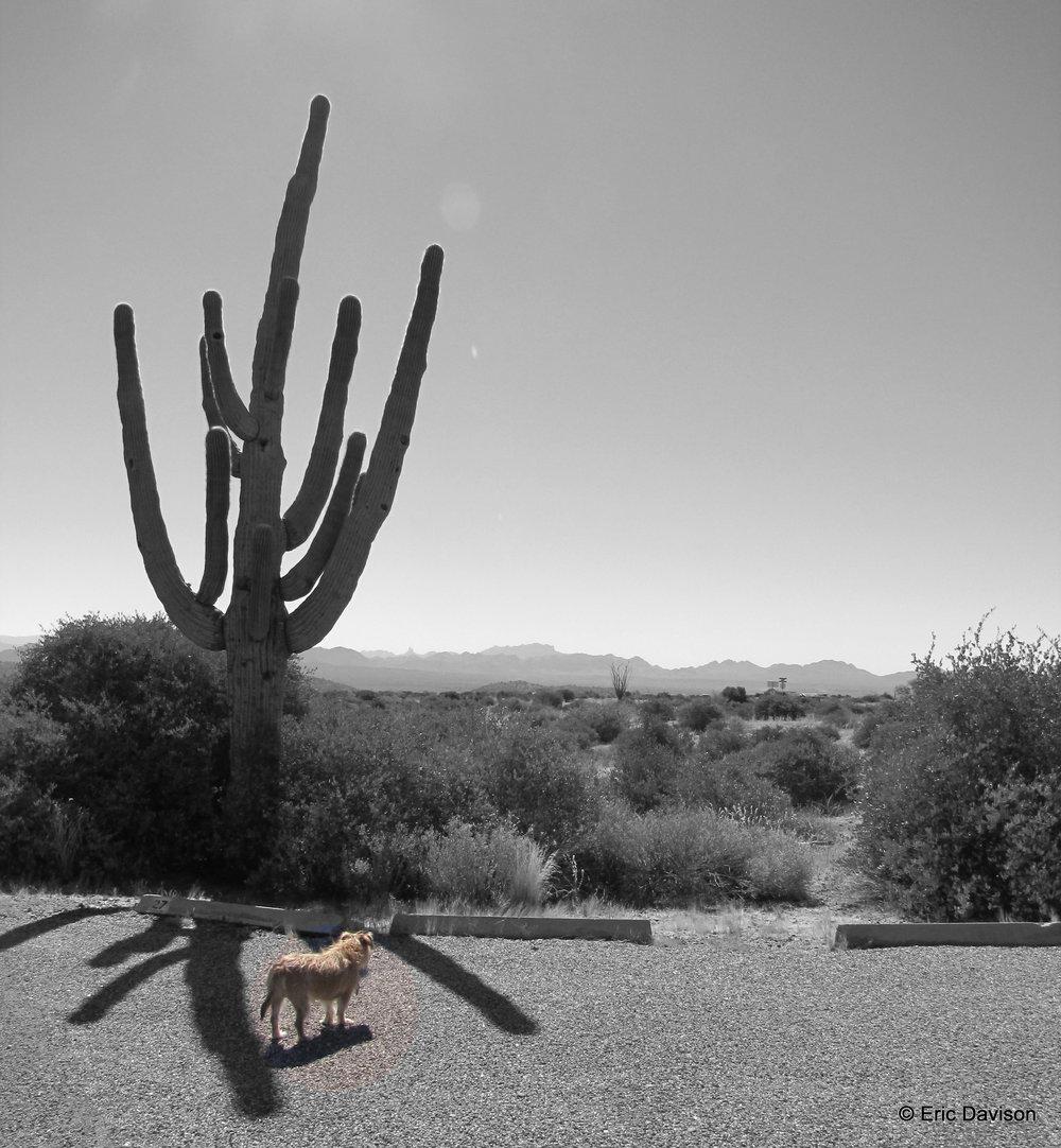 Desert Dog.JPG
