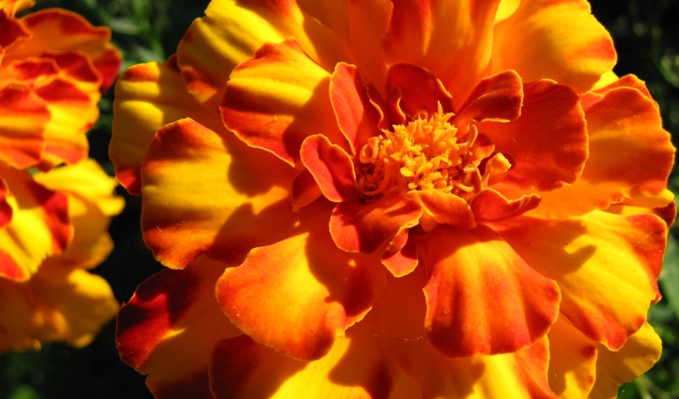 Orange & Yellow Flower