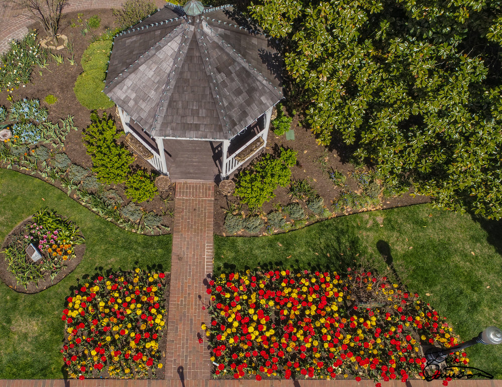 2018 Tulips In Mary Vessels Park From Above - Lewes, Delaware