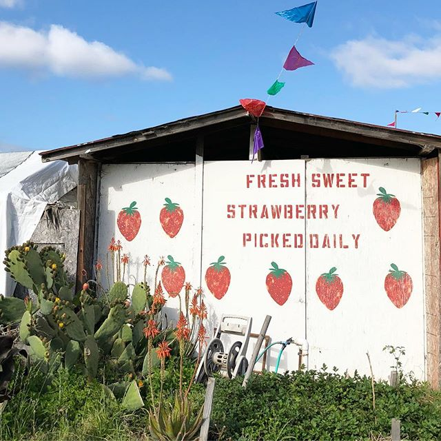 The best little Sonoma strawberry stand 🍓🍓🍓