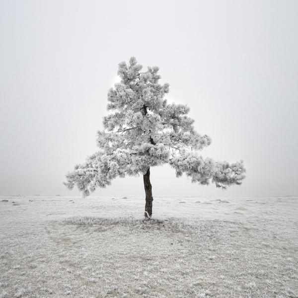 akos tree (1).jpg