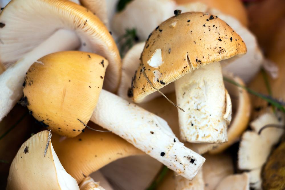 mushrooms-1000px.jpg