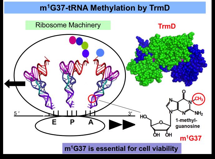tRNA Methylation 2018.png