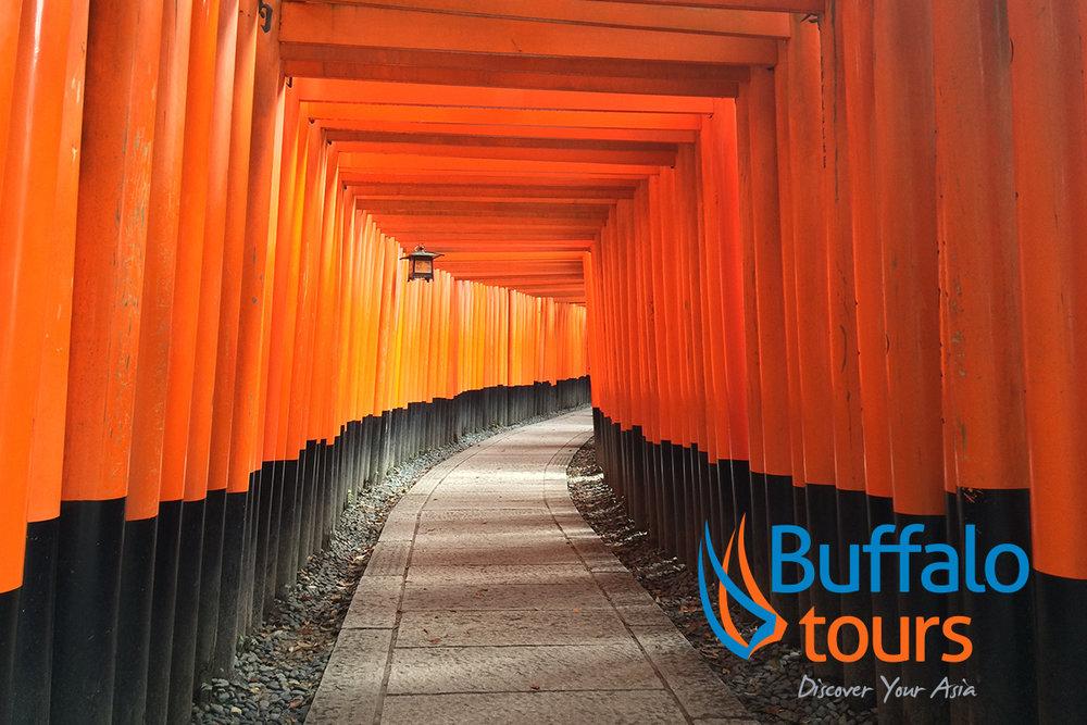 Buffalo+Tours+Image.jpg