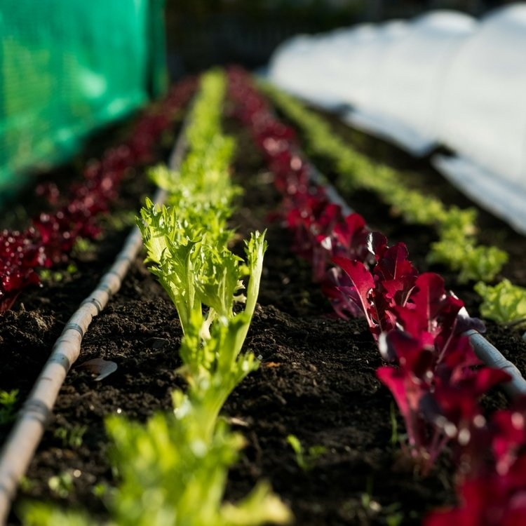Grow your own Seeding workshop + Farm-to-table menu