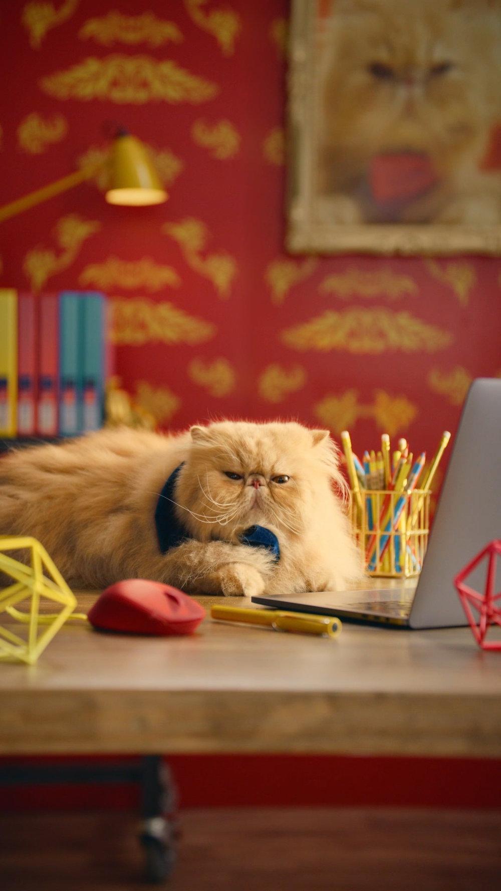 Cats_17.jpg