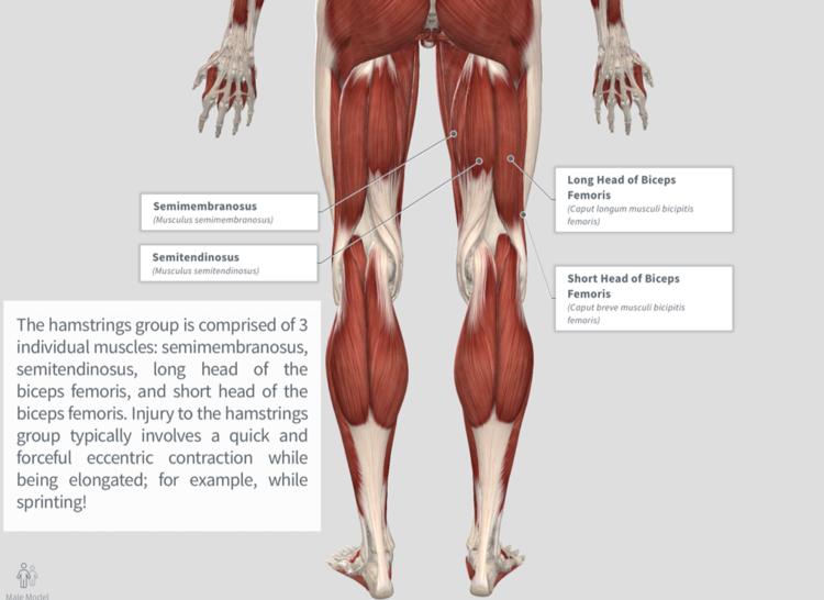 Hamstring Strain — PhysioU