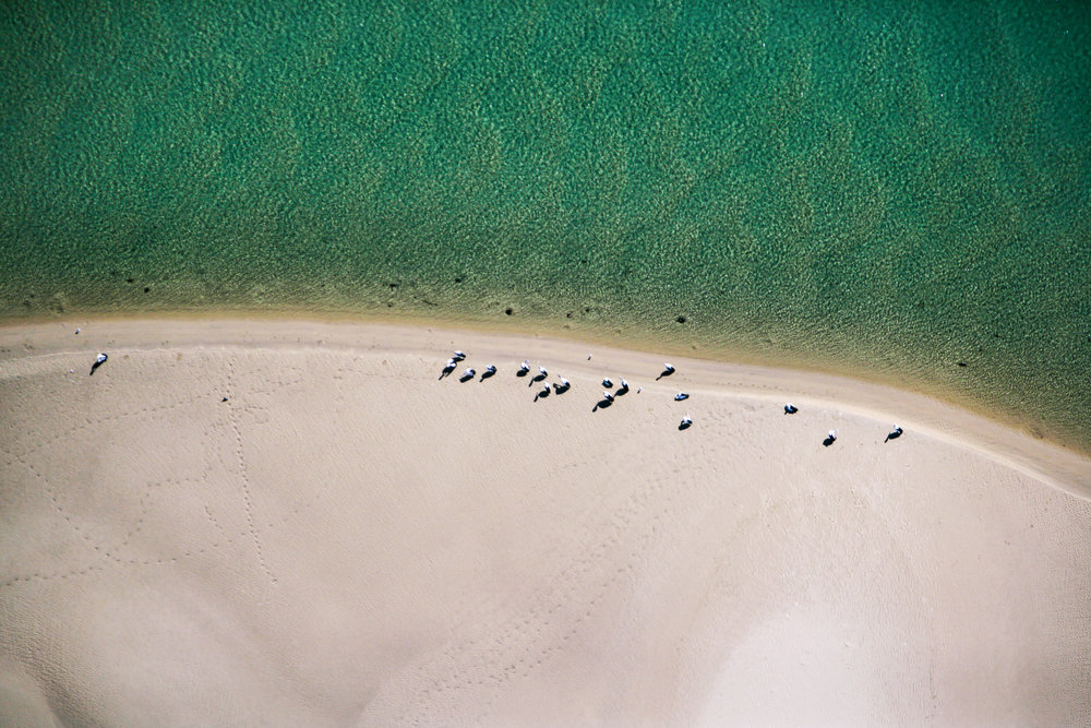 Aerial Photo of pelicans on the beach