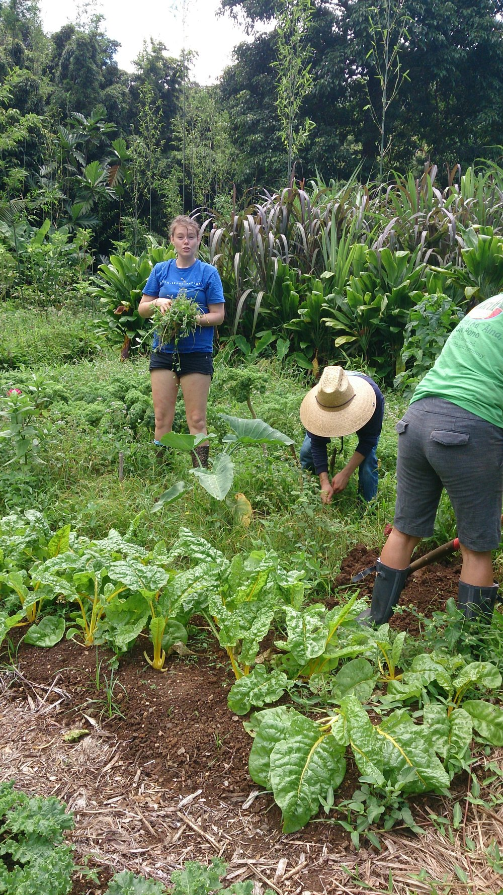 Mahi Aina Community Garden Workday Roots KKV