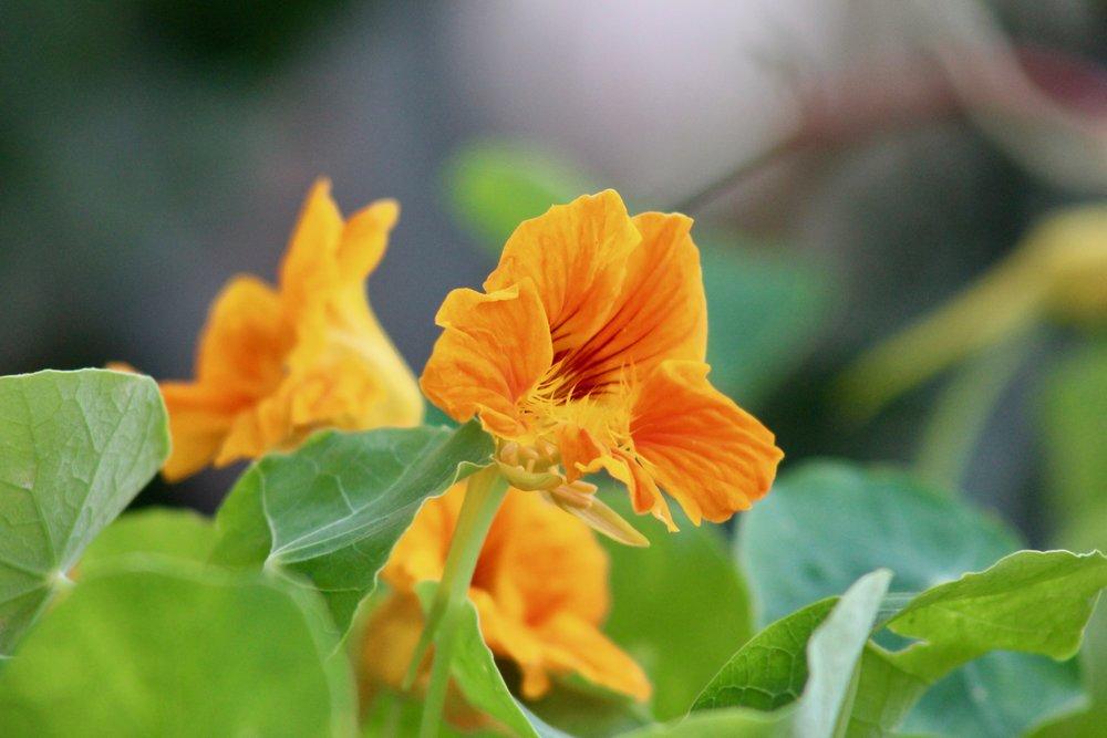 Mala O Kaluaopalena Community Garden -