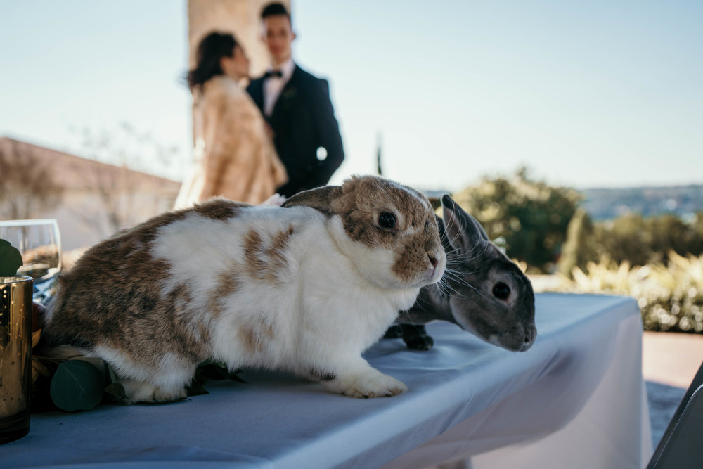 Austin Wedding Videographer - Dolls for Dolls (201 of 323).jpg