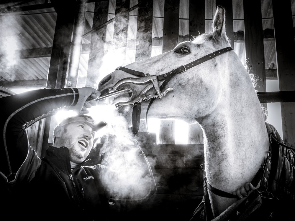 HOrse dentist (1 of 1) 3.jpg