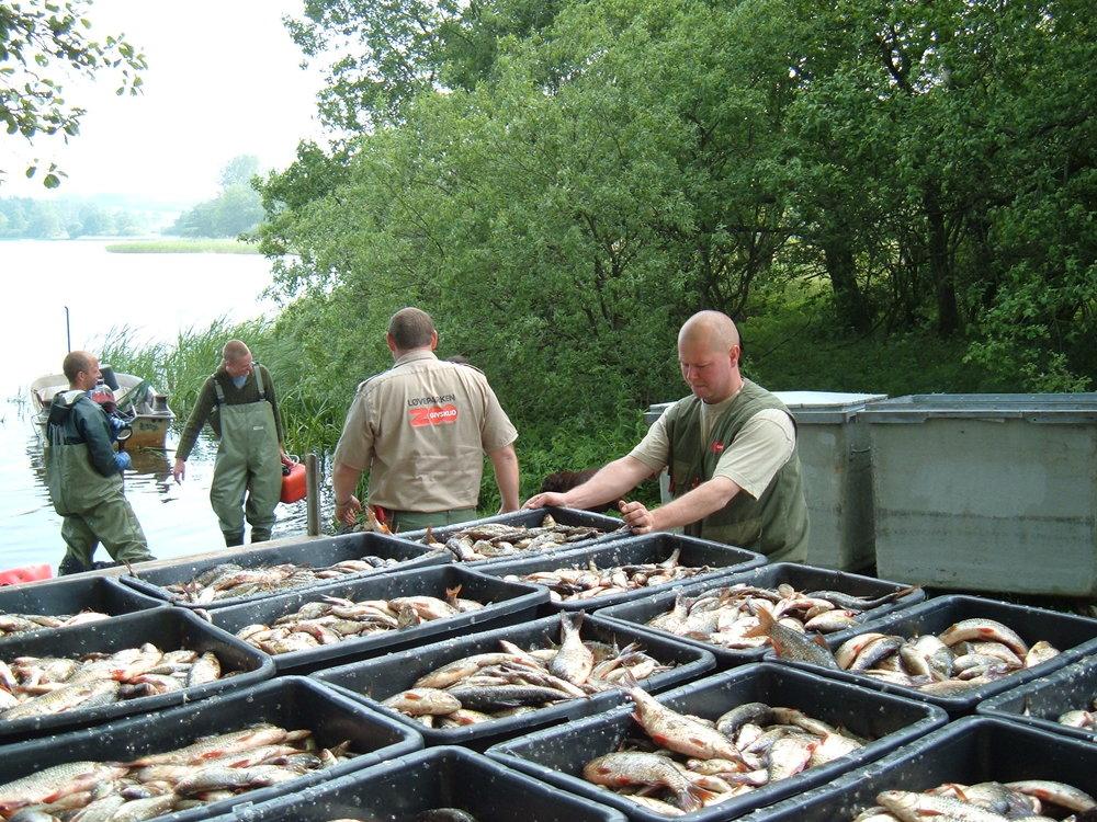 Engelsholm Sø, kasser med fisk.jpg