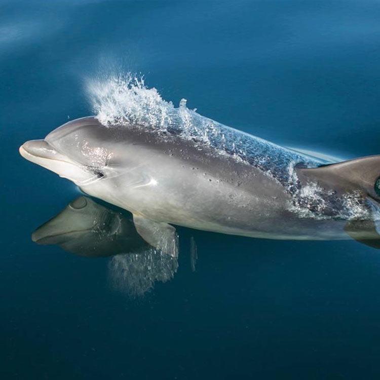 dolphin spotting ecrehous jersey