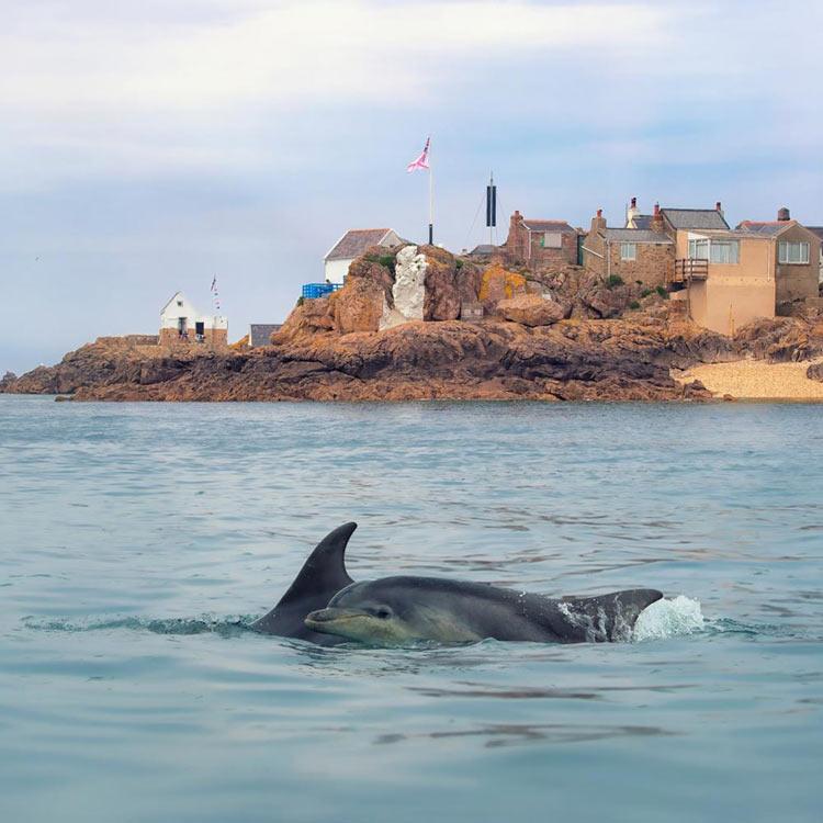 dolphins Ecrehous