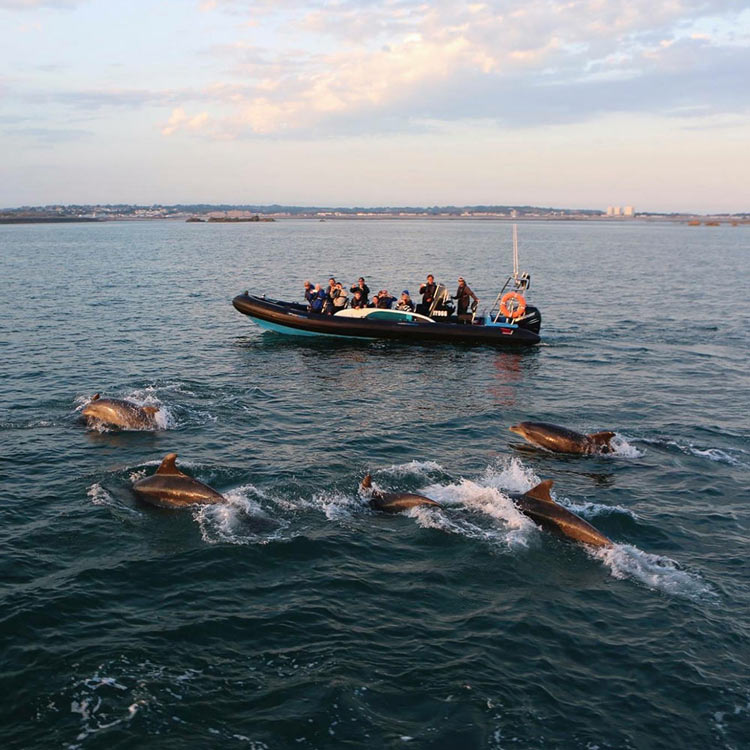 Dolphin spotting Jersey