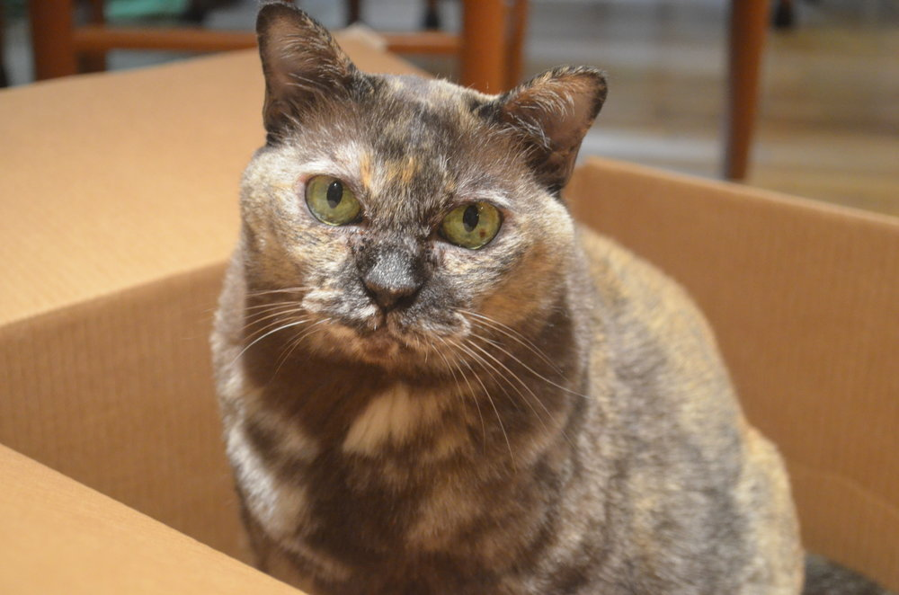 Squawk in a box.