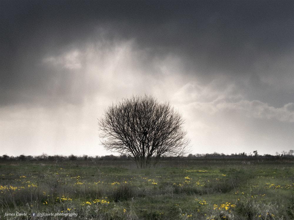 Scrubby Litte Tree