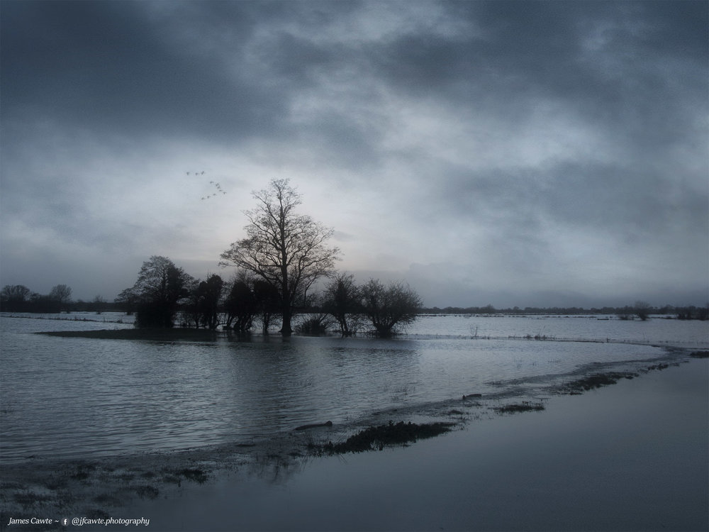 Flooded Copse