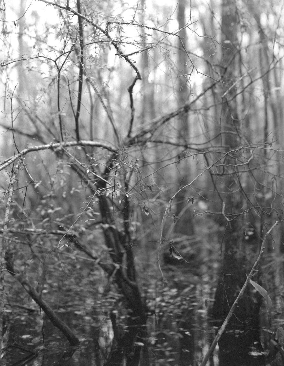 CAM_pt005_Swamp.jpg