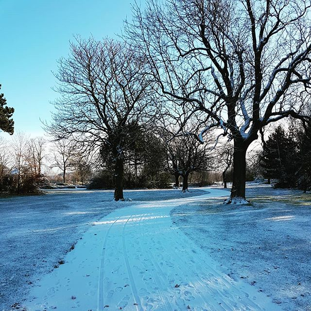 The park behind our office is very pretty in this weather! , , , , , , , , ,  #winter #snow #park #winterwalk