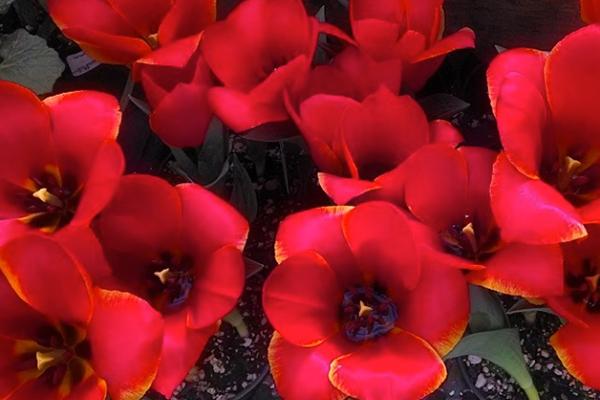 perennials-for-your-garden.jpg