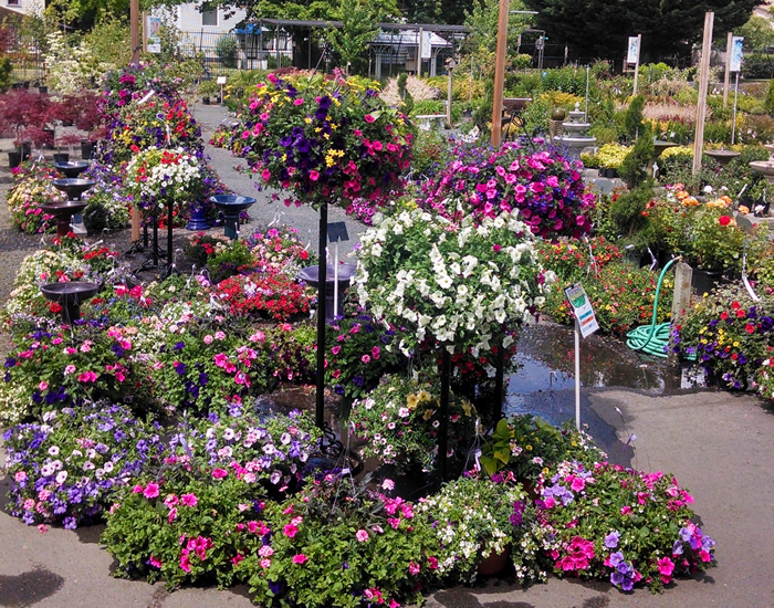 nursery-plants-Springfield.jpg