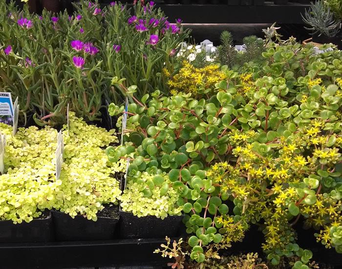 nursery-plants-Eugene.jpg