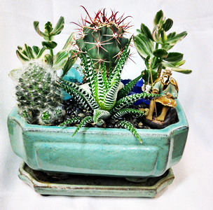 Cactus-Planters.jpg