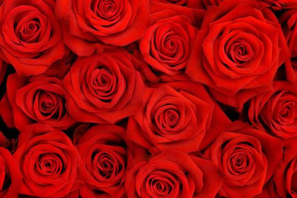flower-delivery.jpg